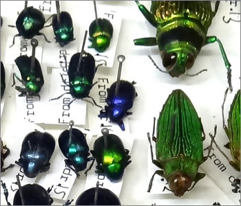 Entomology: insect collections