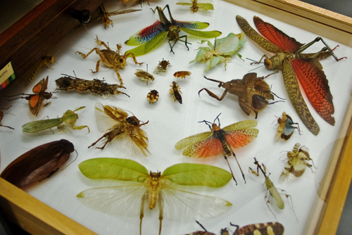 Insect Drawer